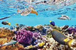 Một cảnh tượng lặn ngắm san hô thật là tuyệt vời tại HP Reef