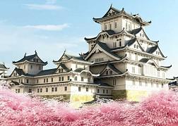 Mùa Hoa Anh Đào Nở Bên Lâu Đài Nagoya