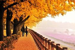 Mùa Thu Lãng Mạn Ở Hàn Quốc