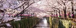 Mùa Xuân Ở Thủ Đô Tokyo