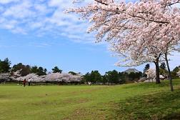 Mùa Xuân Về Trên Công Viên Nara