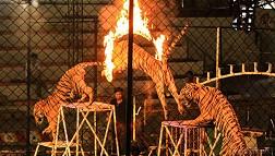 Nét độc đáo của những chú hổ trong công viên Sriracha Tiger Zoo