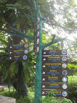 Ngắm vườn thú nổi tiếng nhất Thái Lan tại công viên Safari World