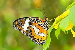 Những chú bướm đủ sắc màu ở Butterfly park and Insect kingdom