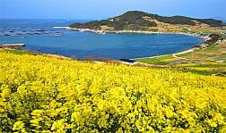Những hình ảnh Thiên nhiên tươi đẹp ở đảo Cheongsando Hàn Quốc