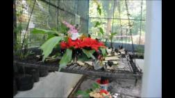 Phòng nhân giống của Vườn Bướm ở Phuket Thái Lan