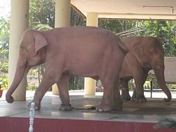 Sức mạnh quyền lực của voi trắng qua lịch sử Chùa Voi Trắng ở Myanmar