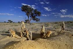 Tham quan công viên Kgalagadi Transfrontier