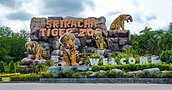 Thăm trại hổ Sriracha Tiger Zoo
