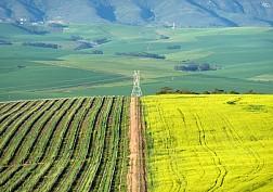 Vùng rượu vang Cape