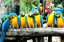 Vườn thú mở tự nhiên của công viên Safari World lớn nhất Châu Á