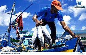 Chợ cá Male