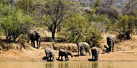 Công viên Quốc gia Pilanesberg