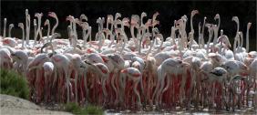 Khu bảo tồn động vật hoang dã Ras Al Khor