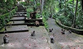 Khu rừng khỉ - Alas Kedaton