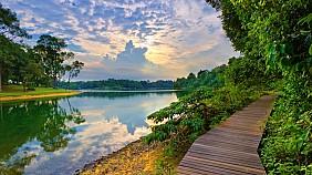 MacRitchie Nature Trail & Reservoir Park