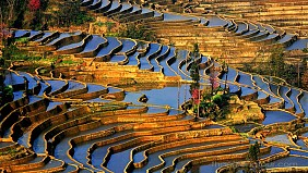 Quần Thể Ruộng Bậc Thang Nguyên Dương