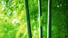 Rừng Trúc Tín