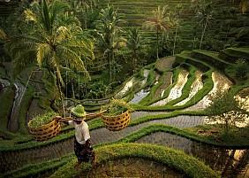 ruộng bậc thang Tegalalang