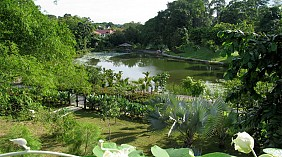 Singapore Botanic Garden (Vườn thực vật Singapore)