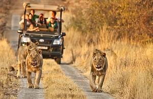 Những Lý Do Khiến Bạn Muốn Lên Lịch Hẹn Với Nam Phi