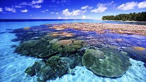 Coral Island – Hòn đảo san hô mê hồn du khách