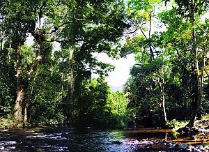 Dừng Chân Nơi Cánh Rừng Pù Mát