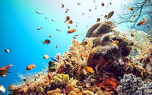 Khám phá khu rừng dưới lòng đại dương của Maldives