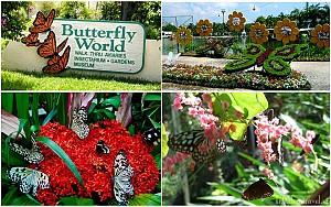 Lạc vào chốn thần tiên tại Vườn bướm Butterfly Garden ở Phuket