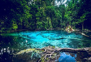 Thả mình trong hồ nước ở Khlong Thom của Thái Lan