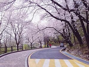 Đừng bỏ lỡ địa điểm này khi tới Hàn Quốc