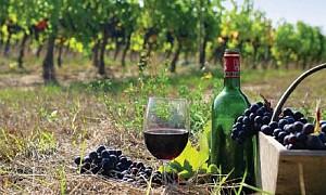 Thế giới rượu vang Nam Phi