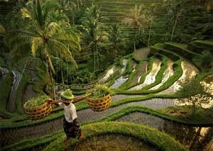 Tin hay cho những người yêu du lịch Bali