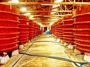 Trải nghiệm độc đáo tại nhà thùng sản xuất nước mắm Phú Quốc