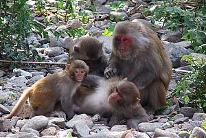 Vi Vu Đảo Khỉ Cát Bà