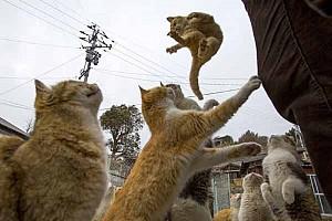 Vui đùa cùng với những con vật đáng yêu tại các thiên đường của Nhật Bản