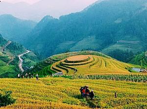 Vùng Núi Tây Bắc - Say Đắm Những Cung Đường Ngắm Mùa Lúa Vàng