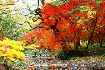 Khám Phá Mùa Thu Lá Đỏ Hàn Quốc 21/10/2016