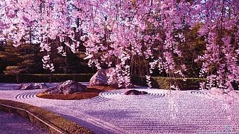 Tour Nhật Bản Ngắm Hoa Anh Đào 2017 khởi hành 14.4.2017