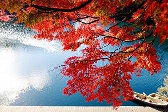 Khám phá Nhật Bản với tour 6N5Đ bay tháng 10,11 từ TP.HCM