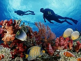 Tour Nam Đảo Câu Cá - Lặn Ngắm San Hô
