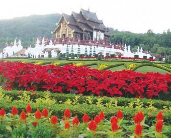 Khám Phá Đóa Hồng Phương Bắc Của Thái Lan: Chiang Mai - Chiang Rai 4N3Đ