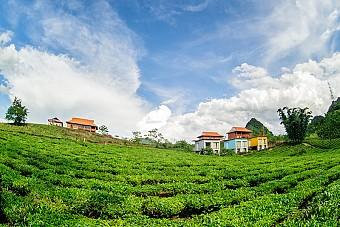Tour Hà Nội - Mộc Châu Arena Village Mùa Hoa Cải Trắng