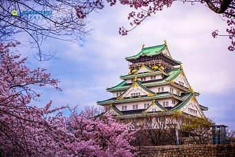 Ngắm Hoa Anh Đào 2018: Tokyo - Fuji - Nabana No Sata - Kyoto - Osaka
