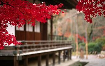 Tour du lịch Nhật tiết kiệm bay tháng 10 xuất phát từ Hồ Chí Minh
