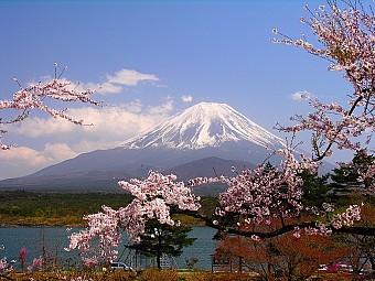 Tour Nhật Bản ngắm hoa Anh Đào 5N4D xuất phát từ TP.HCM