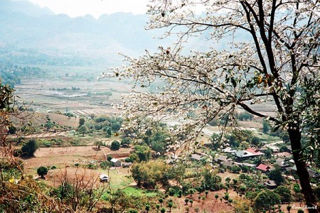 Tour Mộc Châu - Sơn La - Điện Biên - Sapa Tết Âm Lịch