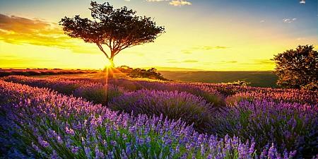 Vòng Quanh Châu Âu Chặng Pháp - Monaco - Ý - San Marino - Vatican Mùa Hoa Lavender 2019