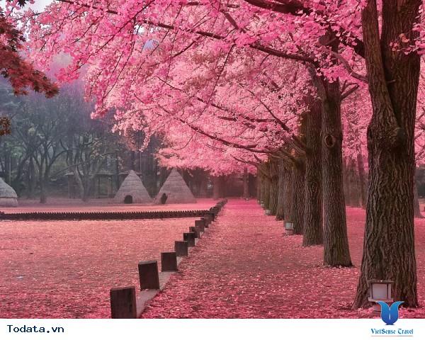 Đến Hàn Quốc – Đừng bỏ lỡ 3 địa điểm yên bình giữa lòng thành phố. - Ảnh 1