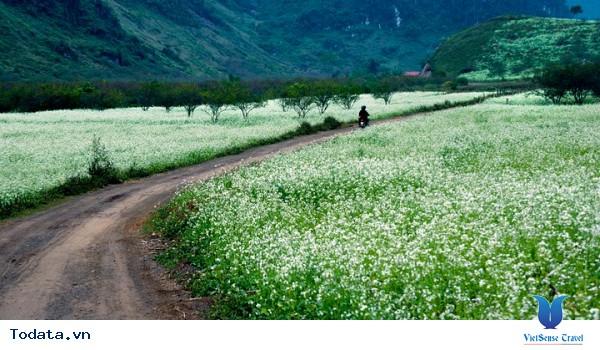 Du lịch Mộc Châu - Chốn bình yên sau những ngày vội vã - Ảnh 18
